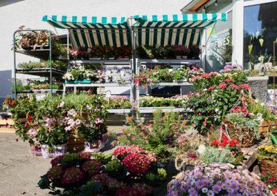 Gartenbau-Drewes-Barntrup-054A3370