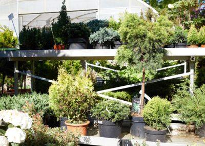 Gartenbau-Drewes-Barntrup-054A3467