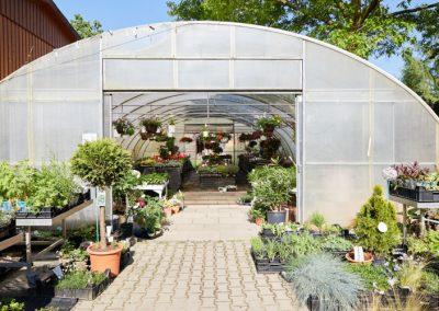 Gartenbau-Drewes-Barntrup-054A3483
